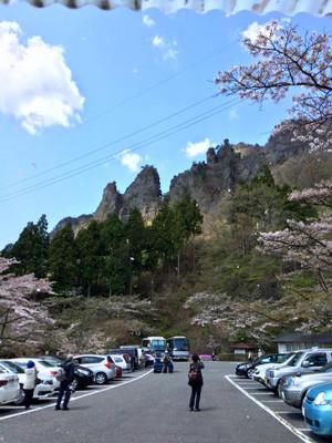 Sakura_fubuki